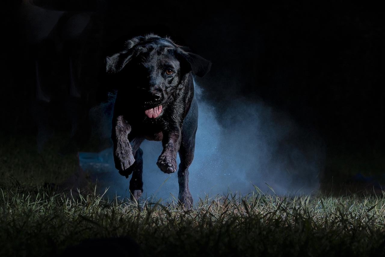 fotografie evocative cane