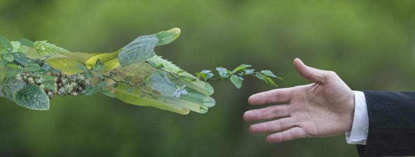 green economy svolta green